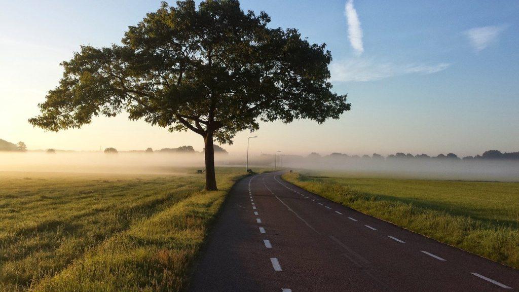 road, tree, fog